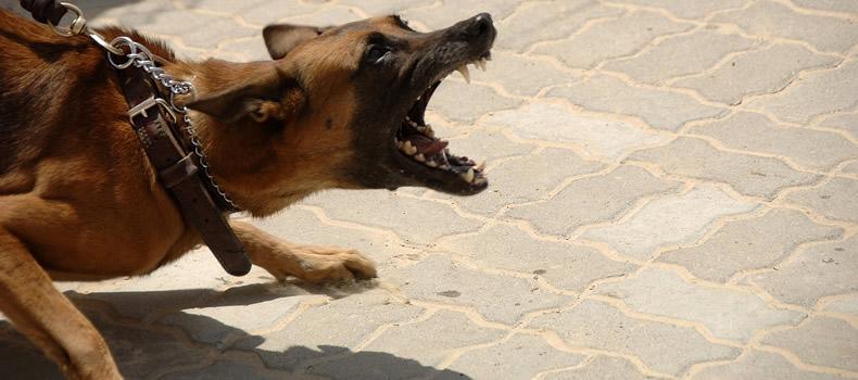 Por qué los perros ladran a algunas personas y a otras no