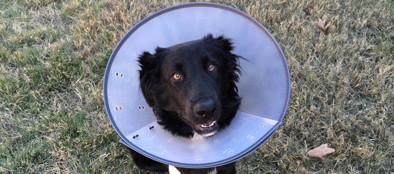 ¿Cómo evitar que los perros se muerden la cola?