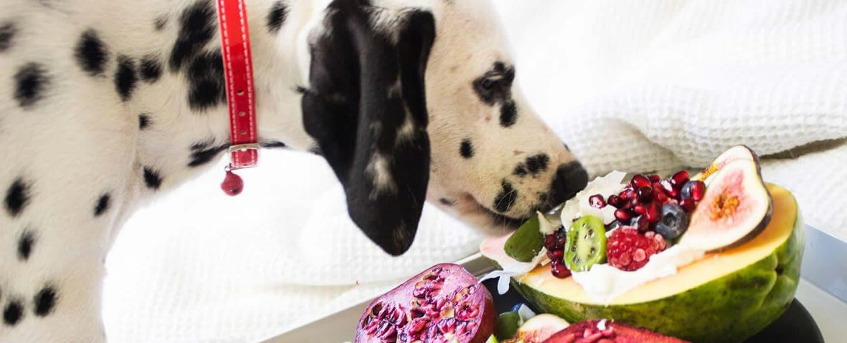 Alimentos que tu perro puede comer y te va a robar del plato
