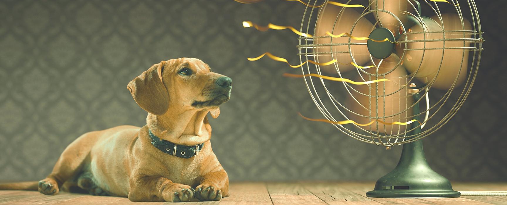 cómo evitar el calor en perros este verano