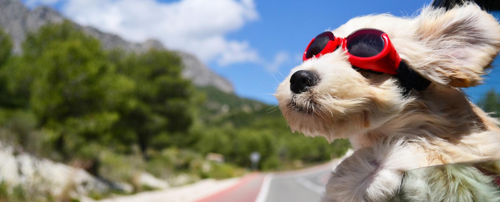 viajar con mascotas en casas rurales en españa